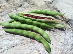 Green Shell Beans