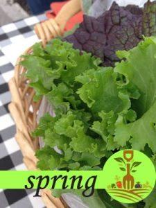 Spring Crop Calendar
