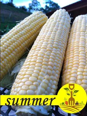 Summer Crop Calendar