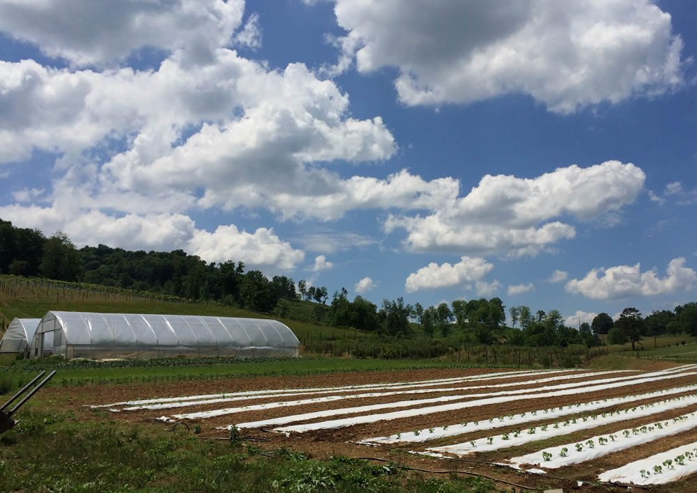 Learn More About Seven Springs Farm to Table in Maynardville, TN